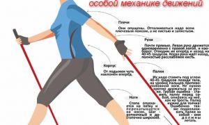 Техника скандинавской ходьбы с палками