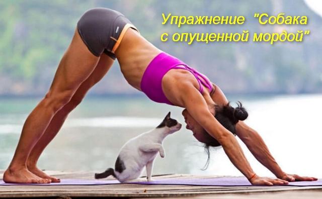 женщина руками и ногами стоит на полу бедра вверху