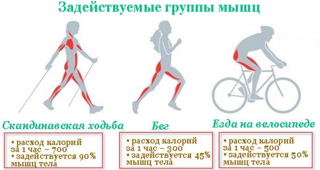 схема сравнения видов спорта по сжиганию калорий