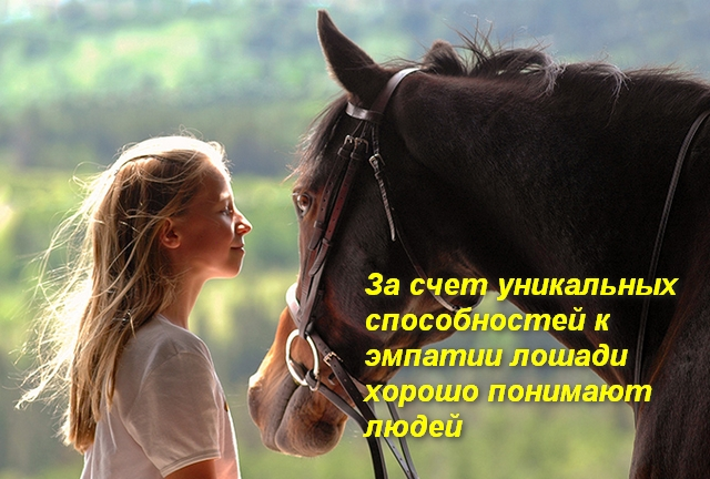 девочка общается с лошадью