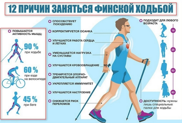 описание пользы от ходьбы с палками