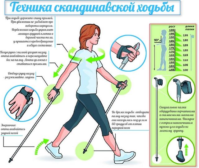 короткое описание техники ходьбы с палками